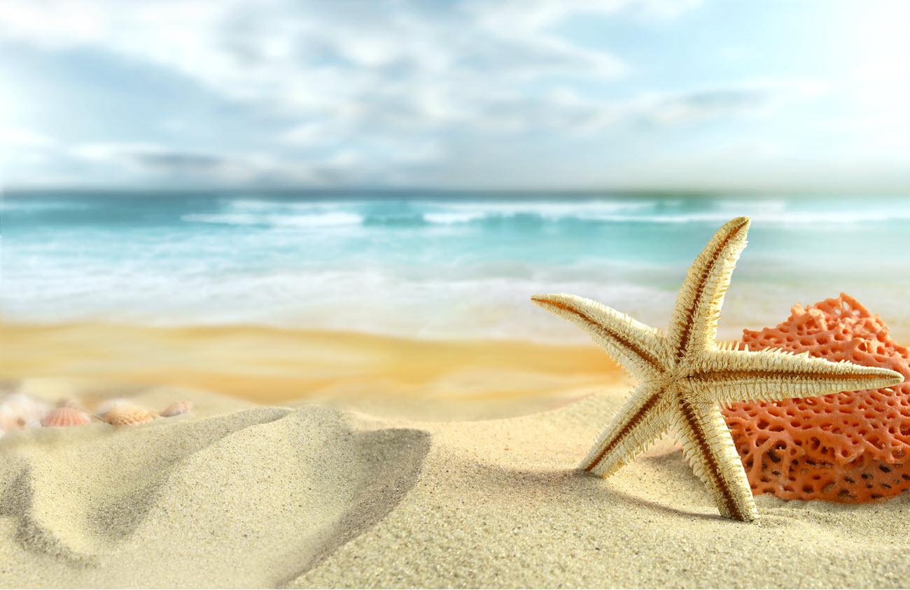 starfish on a beautiful beach.
