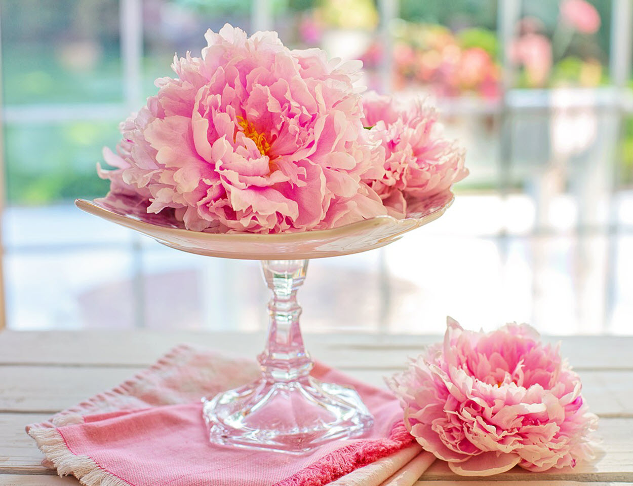 arranged peonies